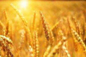 麦畑:セキュリティからレンタルサーバーを選ぶ